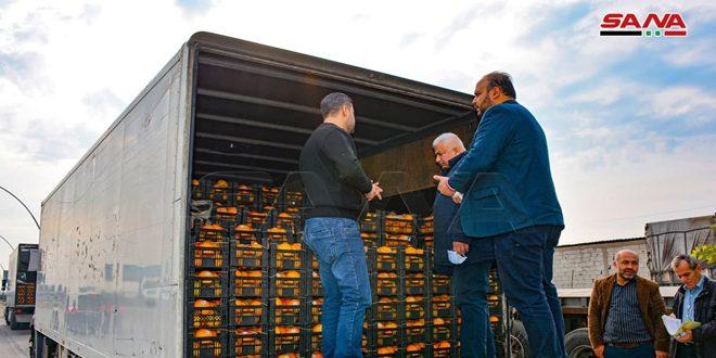 السورية للتجارة في اللاذقية تسير 11 شاحنة من الحمضيات إلى صالاتها في المحافظات
